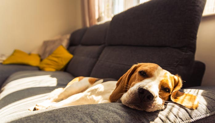 How strong are rules against pets in strata?