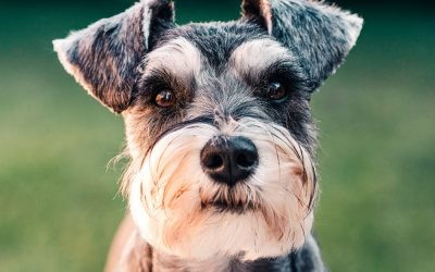 How must you revise or update your strata by-laws re pets following the Cooper Case?